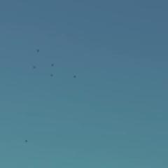 Flight of the drones